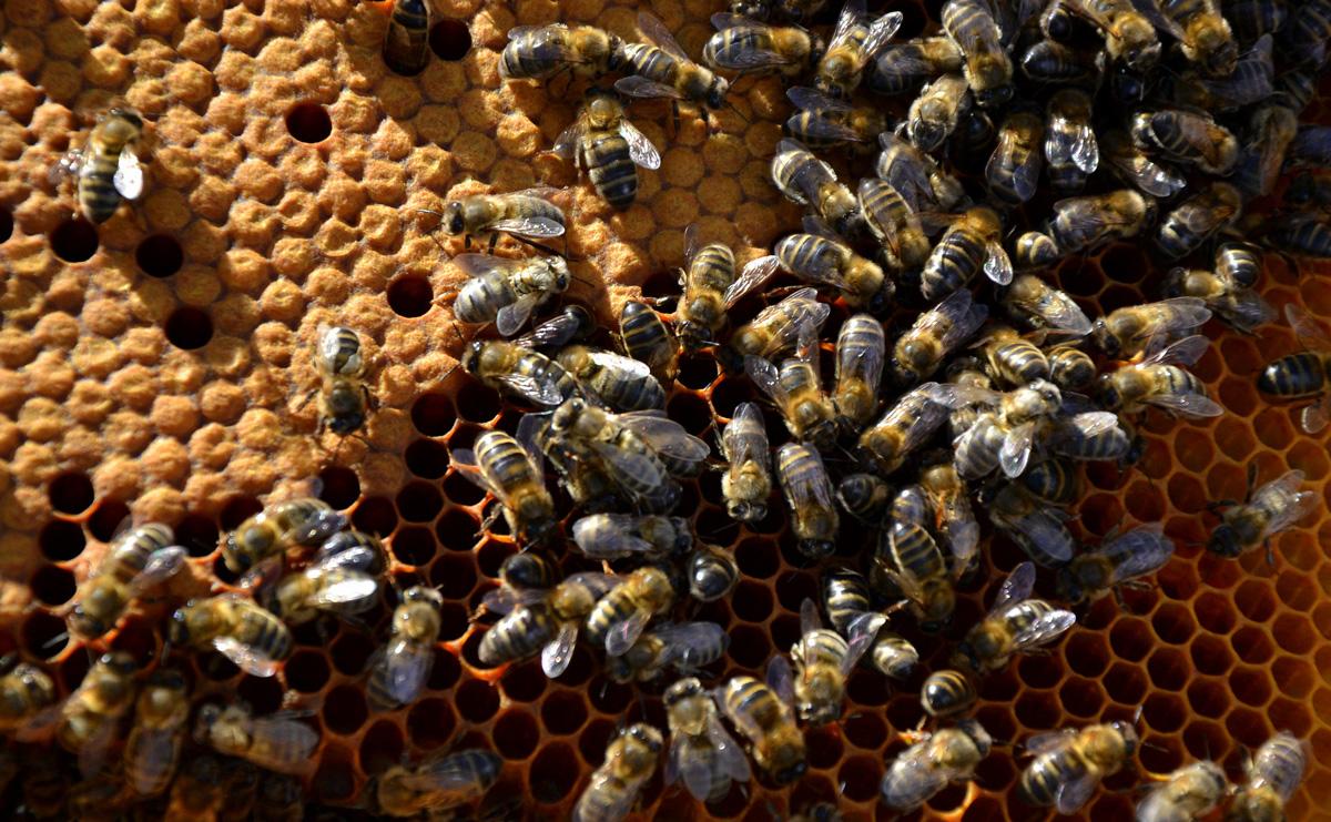 Rusc d'abelles