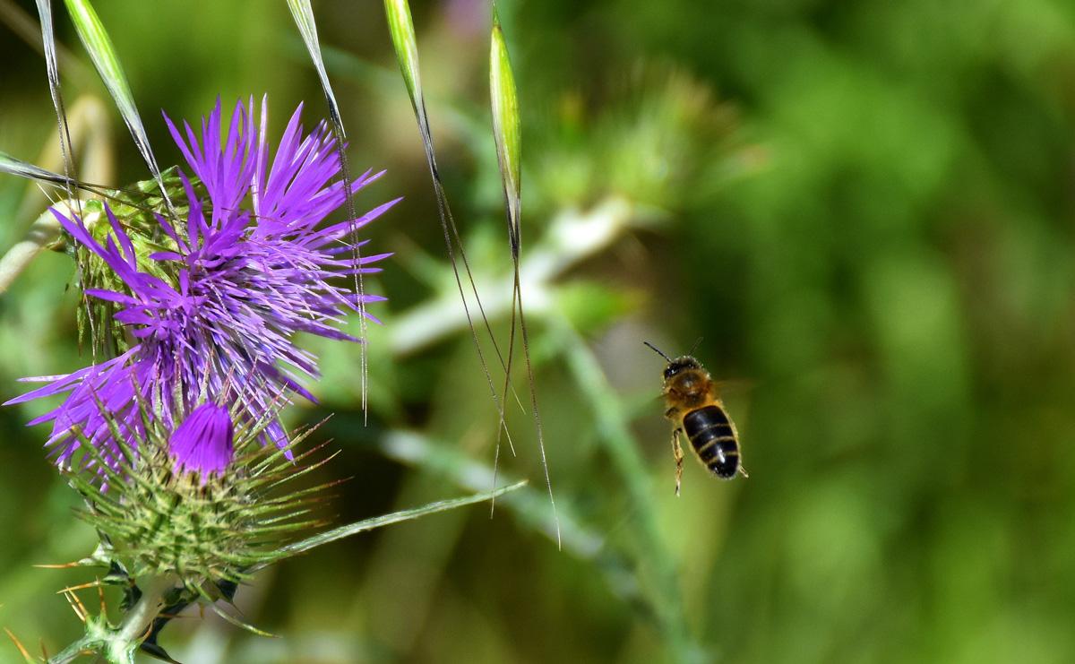 Abella de la mel i card