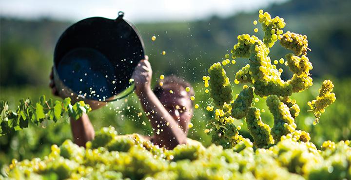 El vino novel, una tradición que vuelve con fuerza